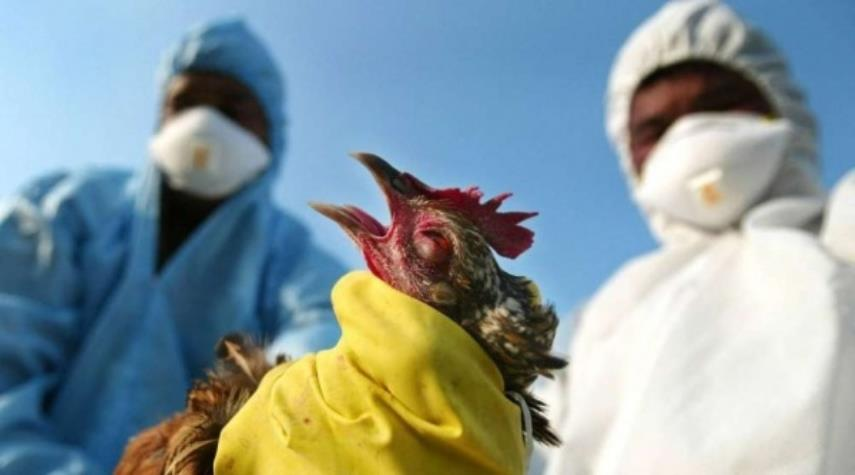 الهند تسجل اول وفاة بانفلونزا الطيور.. تعرف على تفاصيلها